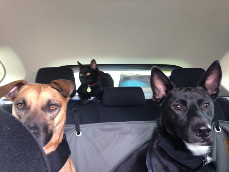 Road Trip Beasts